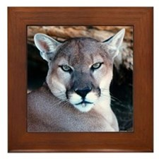 Cougar Framed Tile