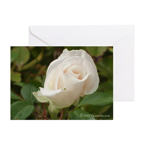 Pale Rose Greeting Cards (Pk of 10)