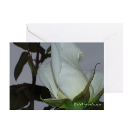 White Rose Greeting Cards (Pk of 10)
