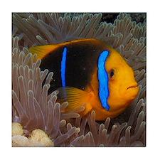 Cute Clown Fish Tile Coaster