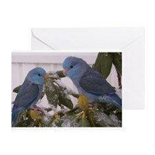 Blue Parrotlet Greeting Cards (Pk of 10)