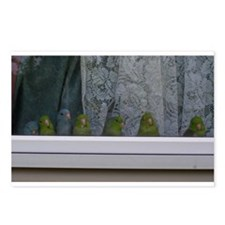 Parrotlet Postcards (Package of 8)