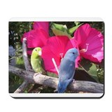 Pacific Parrotlet Mousepad