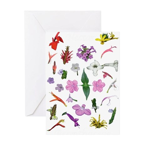 Acanthaceae Costa Rica Greeting Card