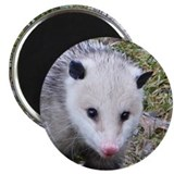 Opossum Magnet