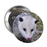 "Opossum 2.25"" Button"