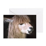 Ringo the Alpaca Greeting Cards (Pk of 10)