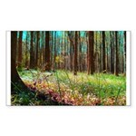 Photo Rectangle Sticker 50 pk)