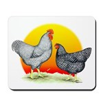 Plymouth Rock Sunrise Mousepad