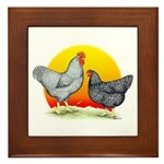 Plymouth Rock Sunrise Framed Tile