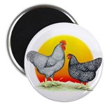 "Plymouth Rock Sunrise 2.25"" Magnet (100 pack)"