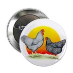 "Plymouth Rock Sunrise 2.25"" Button"