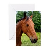 Horse Greeting Card