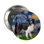 Starry / Border Collie (Z) 2.25