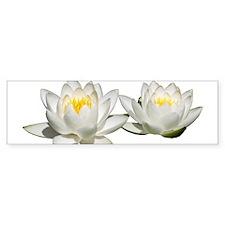 Helaine's Water Lilies Bumper Sticker (50 pk)