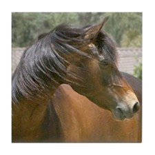 Tile Coaster morgan horse headshot 2
