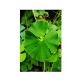 St.Patrick's Rectangle Magnet (100 pack)