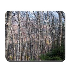 Birch Grove Mousepad