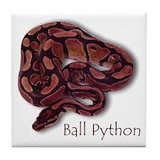 Tile Coaster - Ball Python