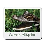 Mousepad - Caiman Alligator