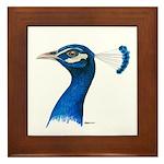 Peacock Head Framed Tile