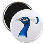 "Peacock Head 2.25"" Magnet (10 pack)"