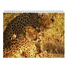 Cheetah Wall Calendar