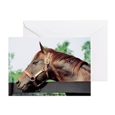 Seattle Slew Greeting Card