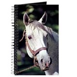 Spectacular Bid Journal