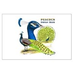 Peacock in Blue Large Poster