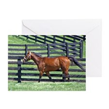 BIG BROWN Greeting Cards (Pk of 10)