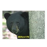 Benjamin Black Bear Postcards (Package of 8)