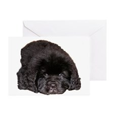 Newfoundland Puppy Dog Greeting Cards (Pk of 20)