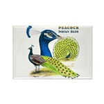 Peacock Indian Blue Rectangle Magnet
