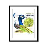 Peacock Indian Blue Framed Panel Print