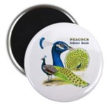 """Peacock Indian Blue 2.25"""" Magnet (100 pack)"""