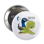 """Peacock Indian Blue 2.25"""" Button (100 pack)"""