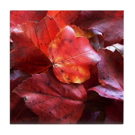 Red Leaves Tile Coaster