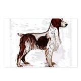 brittany spaniel portrait Postcards (Package of 8)