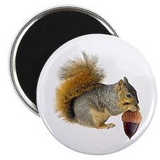 Squirrel Eating Acorn Magnet