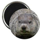 "Groundhog eating 2.25"" Magnet (10 pack)"