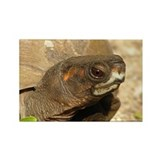 Box Turtle Magnet