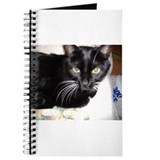 twenty paw productions Journal