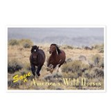 Save Wild Horses Postcards (Package of 8)