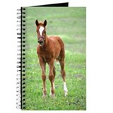 Cute Colt Journal