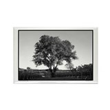 Black + White Tree Photograph Rectangle Magnet (10