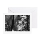 Sunlit redwood trees Greeting Cards ( 6)