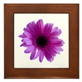 Purple Daisy Framed Tile