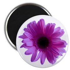 "Purple Daisy 2.25"" Magnet (10 pack)"
