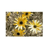 Artistic Black-Eyed Susan Rectangle Magnet